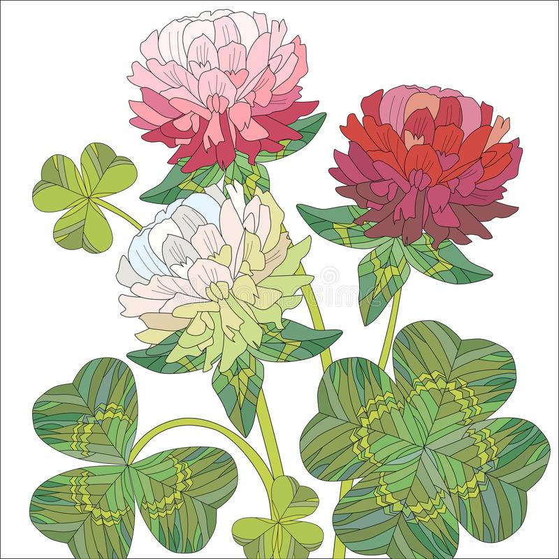 Flowers of red and white clover with leaves. royalty free illustration