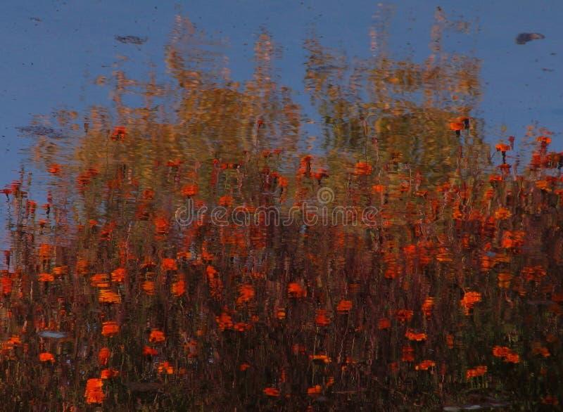 Flowers Reflected in Kaniv, Ukraine stock image