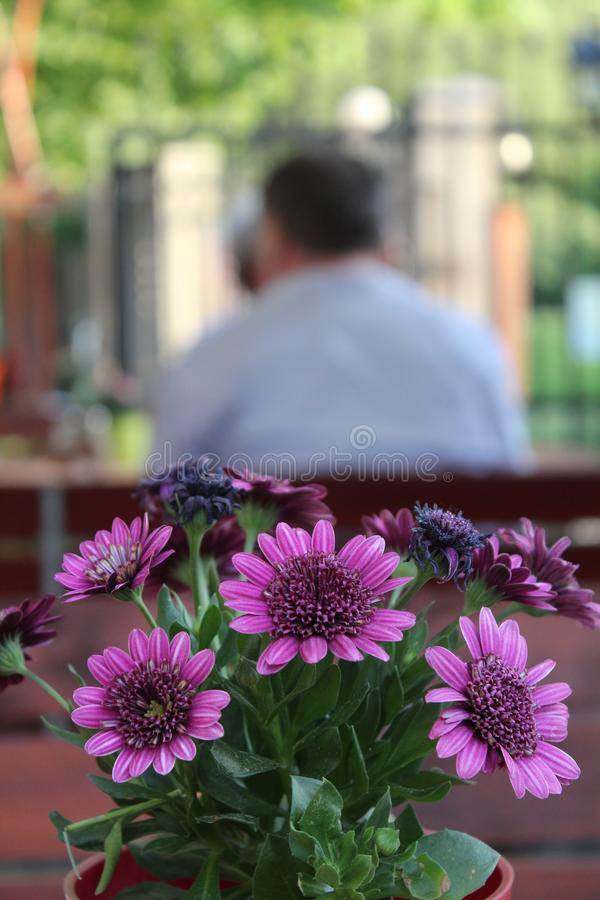Flowers at a restaurant table royalty free stock photography