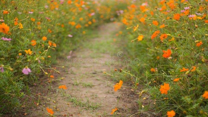 Flowers Road stock image