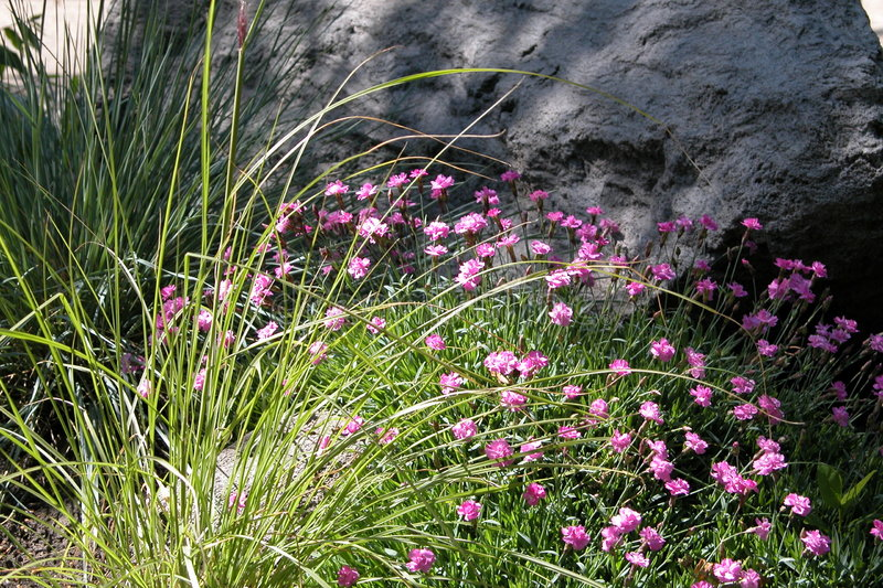 Download Flowers Before Rock stock photo. Image of rock, pink, grass - 10820