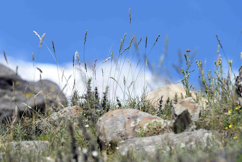 Flowers and rocks in the mountain stock photos