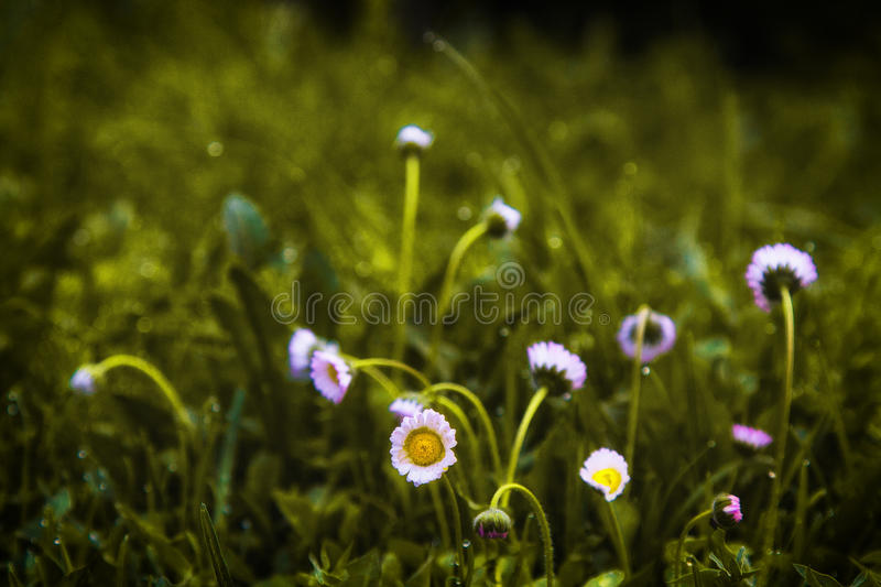 The flowers stock photography