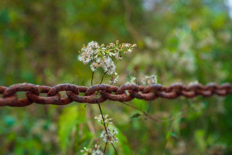 Flowers on a rusty chain. With plants in the background. Taken in the fall stock photos