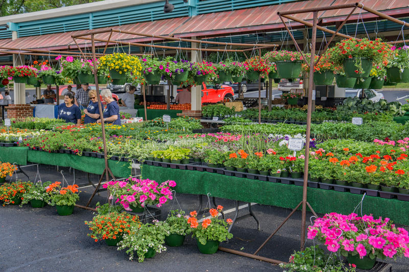 Flowers For-sale at the Vinton Farmers Market. Vinton, VA – April 29th: Fresh flowers for-sale at Vinton Farmers Market located in Center in the Square royalty free stock photos