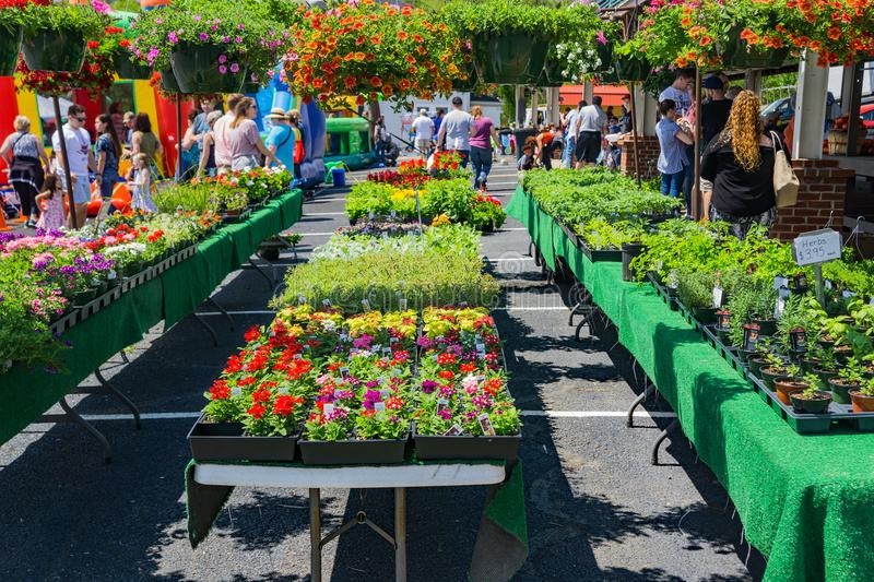 Flowers for Sale at the Vinton Farmers Market. Vinton, VA – April 28th: Fresh flowers at the Vinton Farmers Market during the Annual Dogwood Festival located stock photography