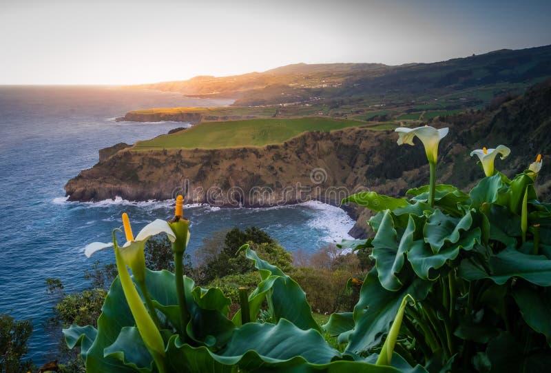 Flowers on the Sao Miguel coastline royalty free stock photo