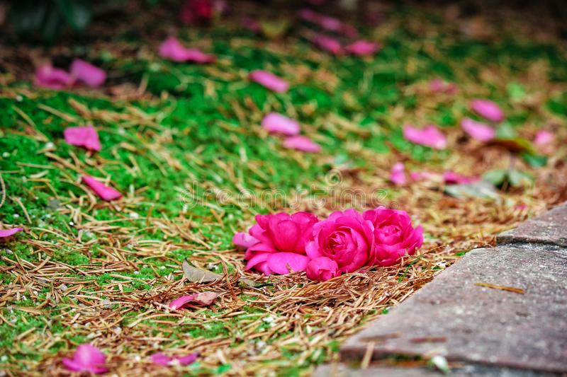 Flowers scattered on the ground stock photos
