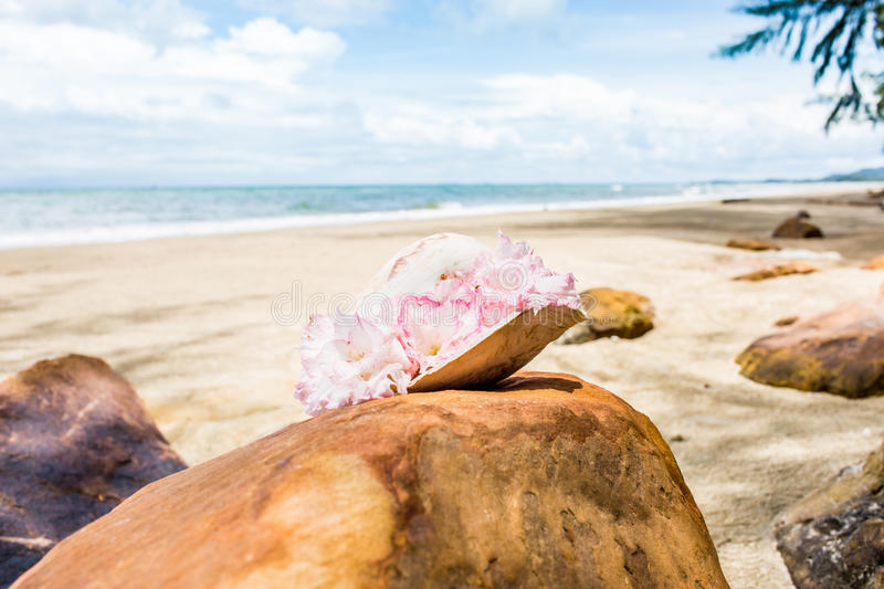 Flowers in seashell vase on the rock with seascape background royalty free stock image