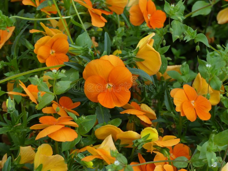 Flowers Season Botanical Floral Nature Aesthetic Colours stock photography