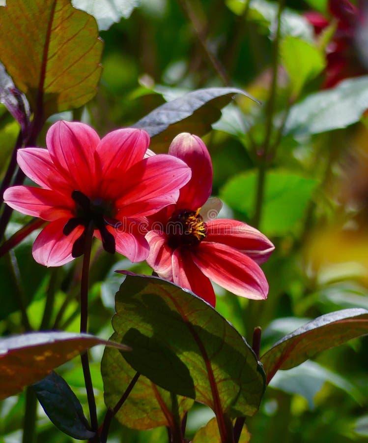 Flowers Season Botanical Floral Nature Aesthetic Colours Rose stock photos