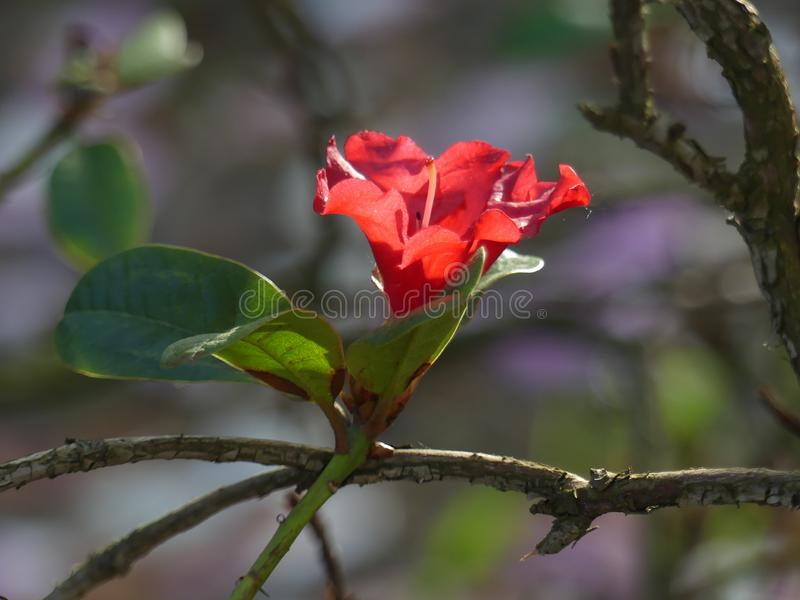 Flowers Season Botanical Floral Nature Aesthetic Colours Rose stock images