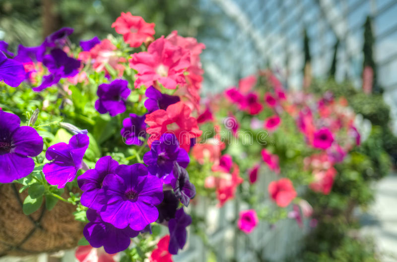 Download Flowers in selective focus stock image. Image of purple - 34534091