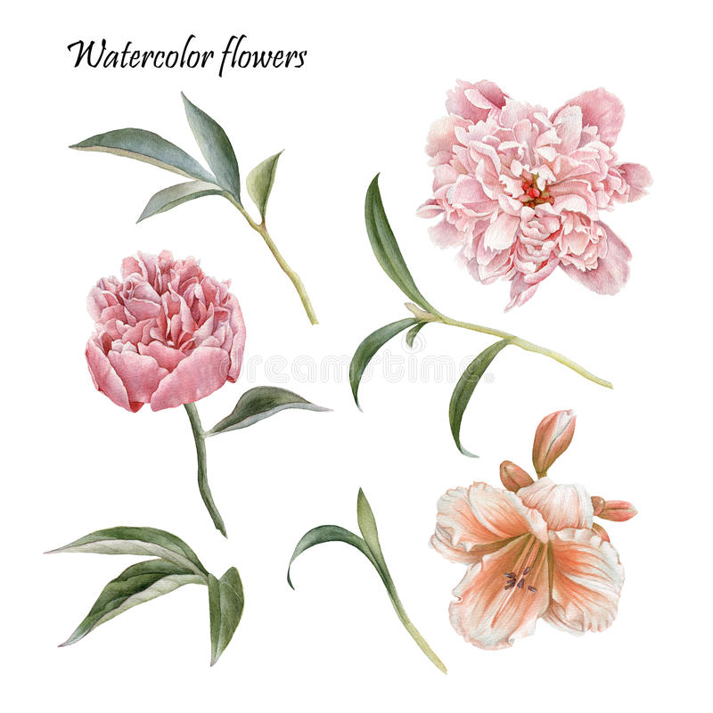 Flowers set of peonies, lily and leaves royalty free illustration