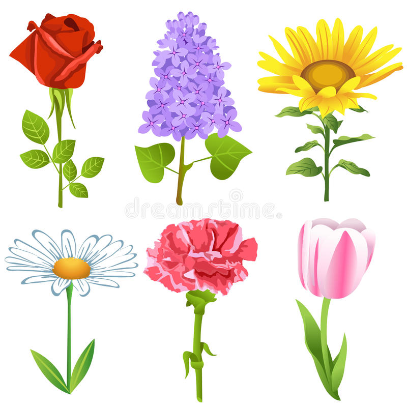 Flowers set. Vector set of flowers isolated on a white background