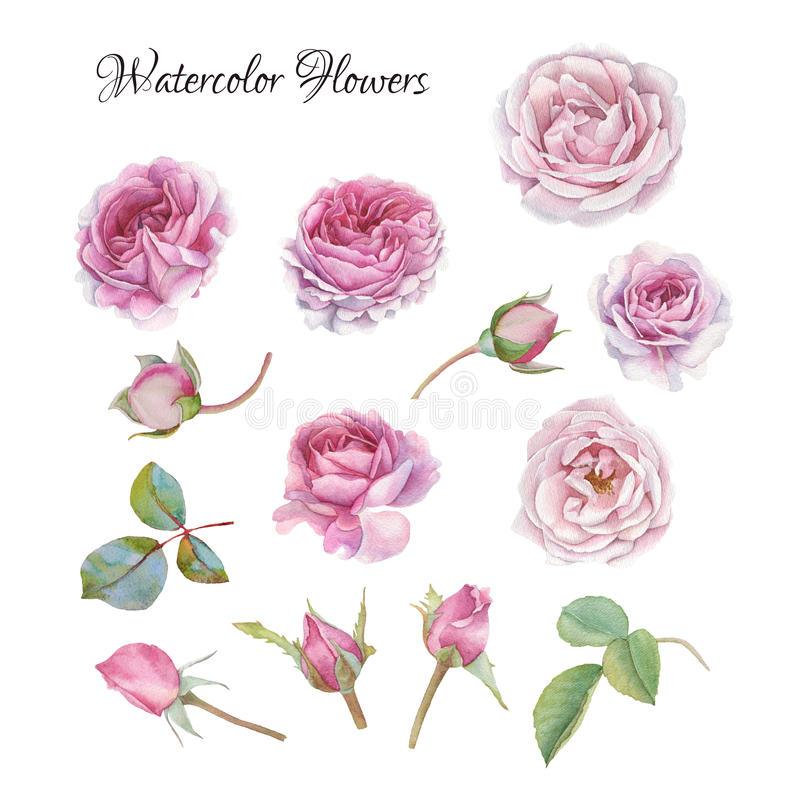 Flowers set of watercolor roses and leaves stock illustration