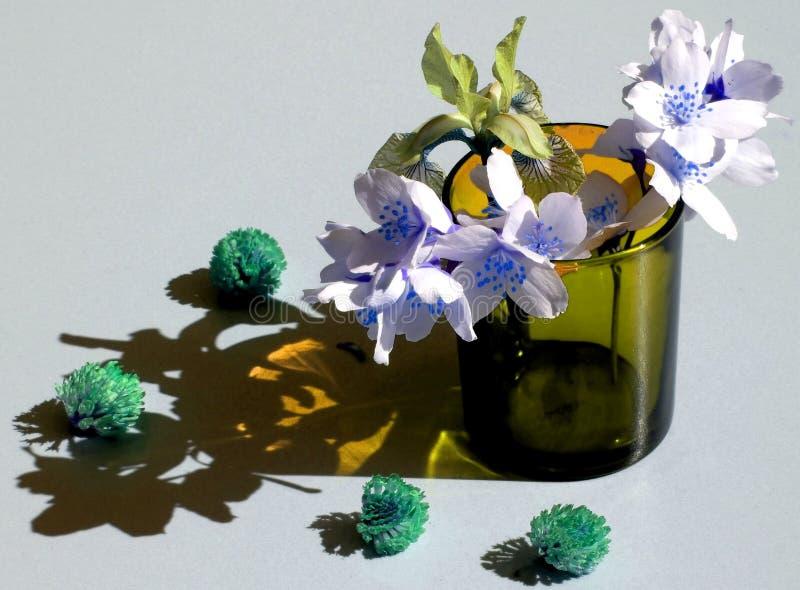 Flowers and shadows flare iris jasmine clover stock image