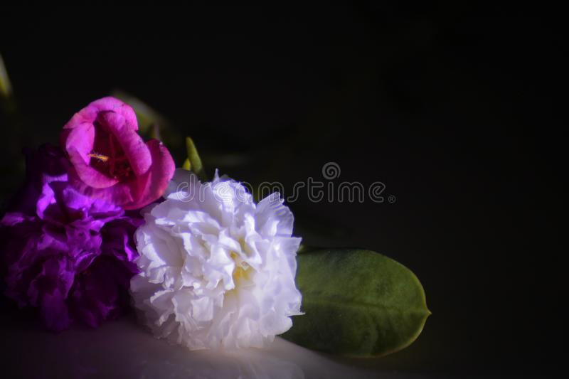 Flowers and shine royalty free stock photo