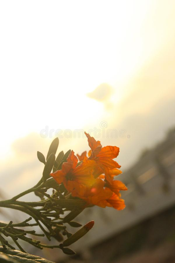 The flowers and the shining sun are very beautiful stock images