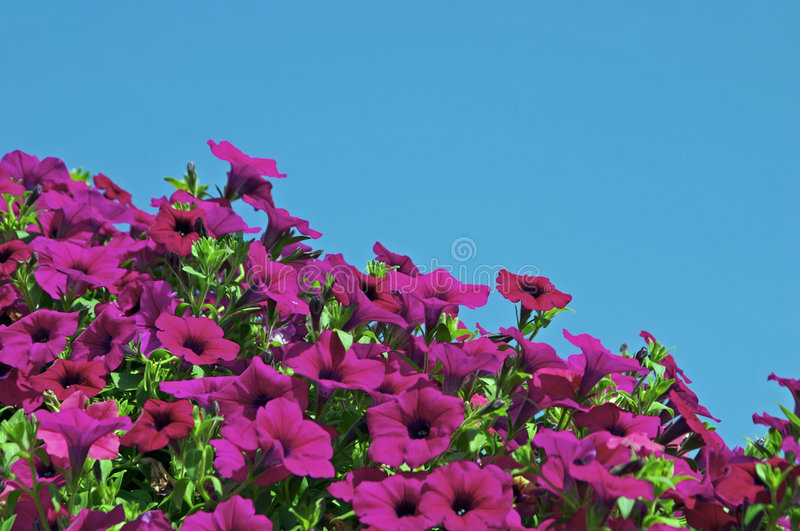 Flowers and sky stock photo