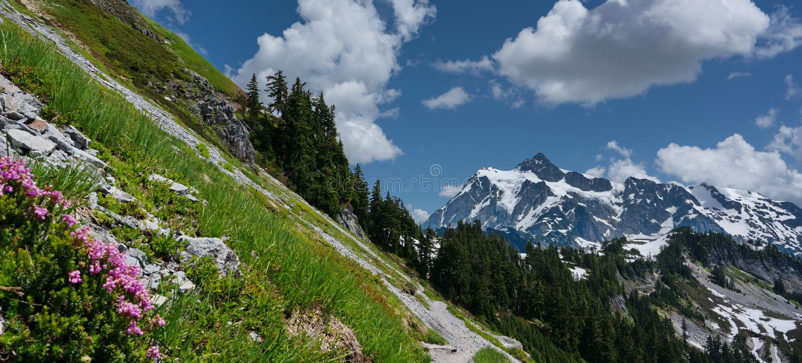 Flowers and snowcapped mountains landscape with blue sky and white clouds. Mt. Baker-Snoqualmie National Forest stock photos