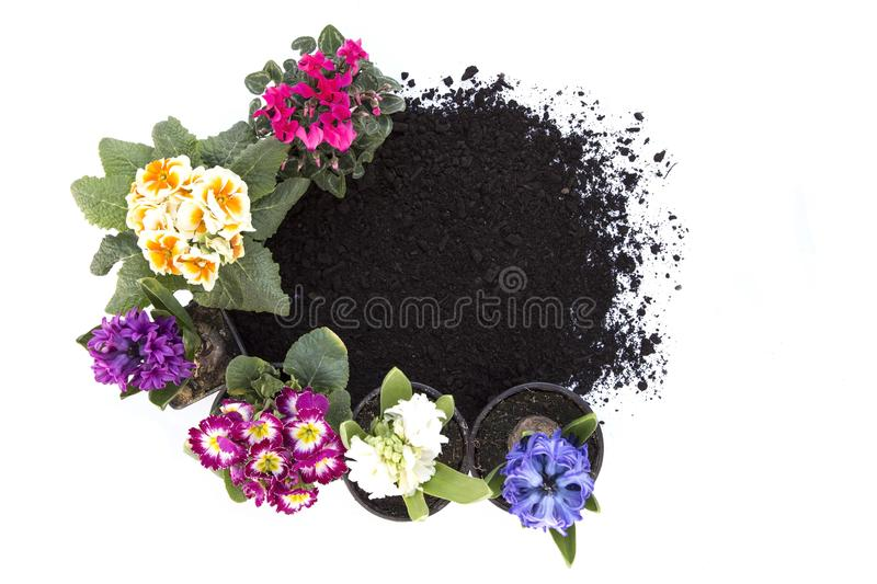 Flowers and soil stock image