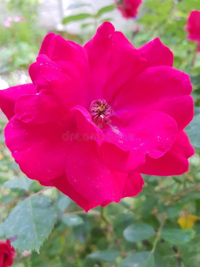 Flowers005 royaltyfri foto