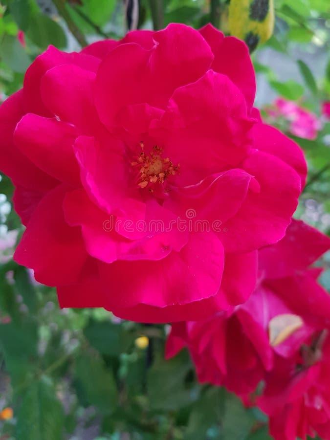 Flowers003 arkivfoto