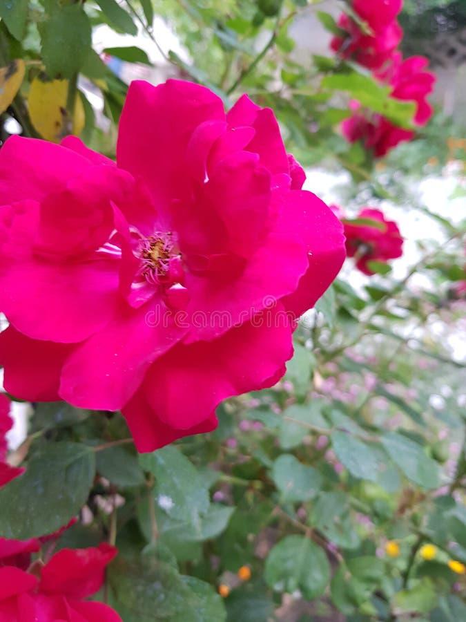 Flowers004 arkivbild