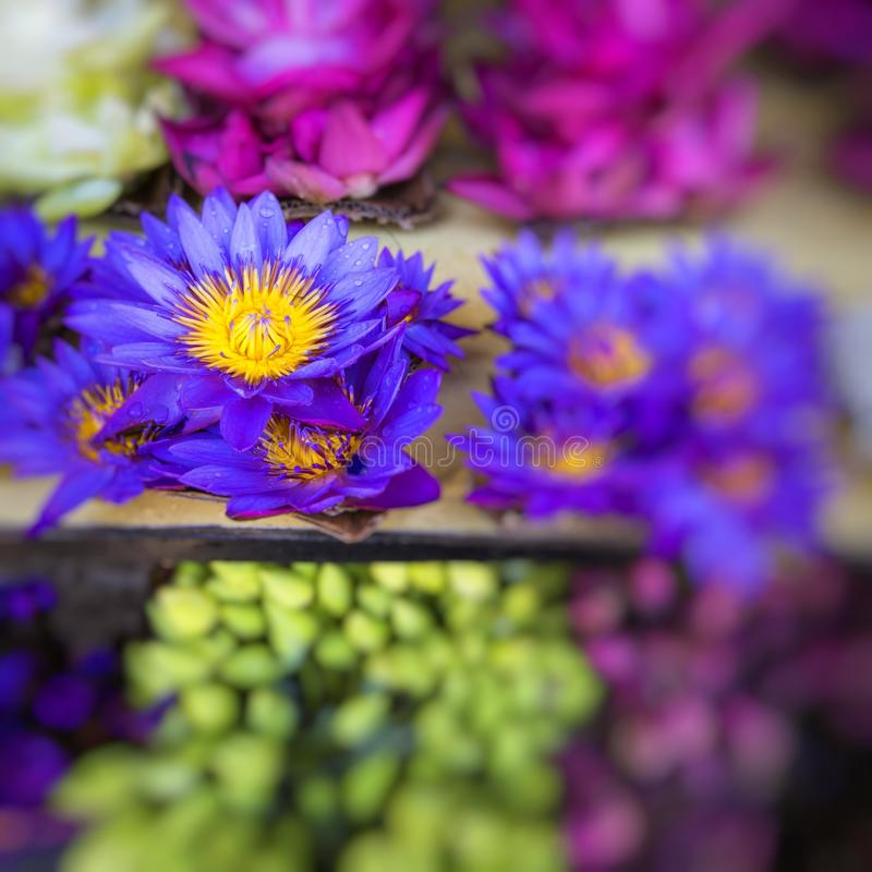 Flowers sold to be used as offerings in front of the Temple of t. He Tooth Relic in Kandy Sri Lanka royalty free stock image