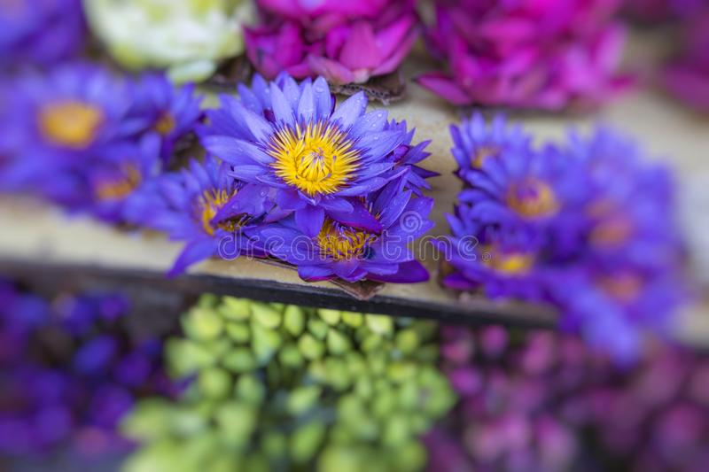 Flowers sold to be used as offerings in front of the Temple of t. He Tooth Relic in Kandy Sri Lanka stock photography