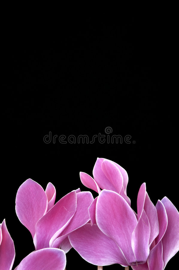 Download Flowers with space stock image. Image of macro, leaf, background - 771727