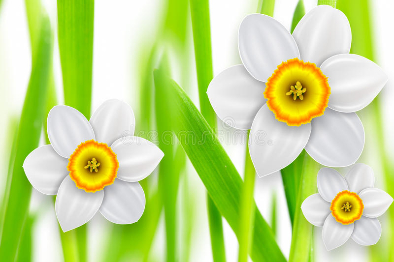Flowers spring background vector illustration