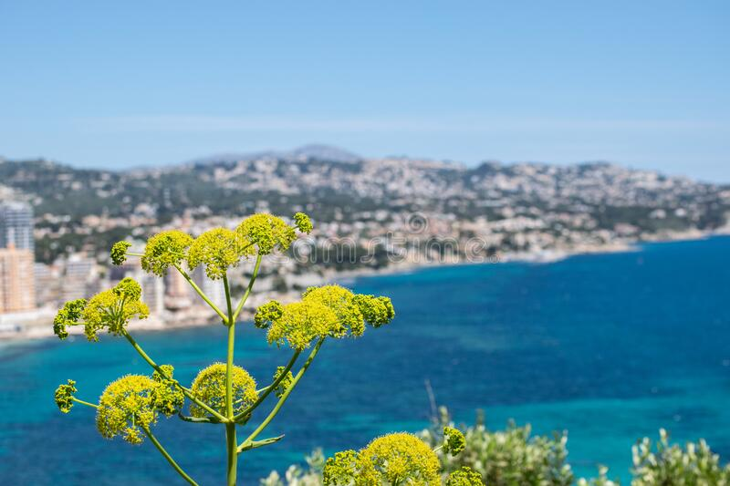Flowers in spring with a beach background of the East coast of spain royalty free stock image