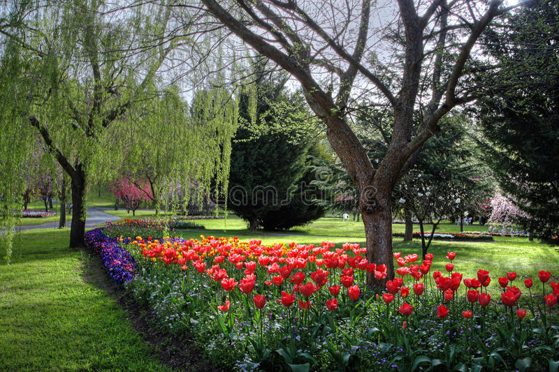 Flowers in springtime. Colorful park in springtime with trees and flowers royalty free stock images