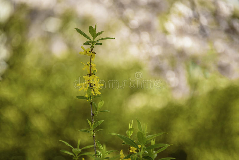 Flowers. In springtime the flowers enchant stock photo