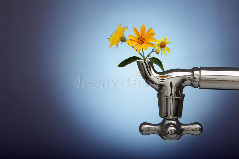 Flowers sprouted in the metal tap. Eco concept stock photos