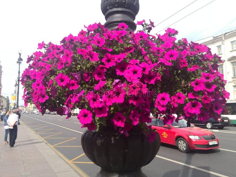 Flowers in St. Petersburg stock image