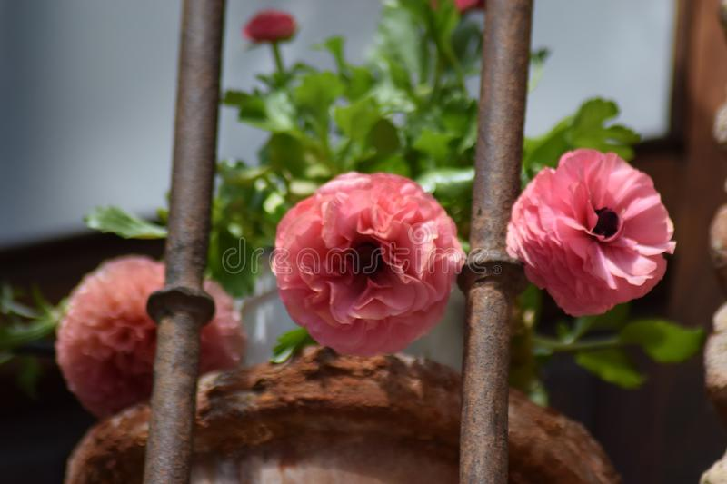 Spring is in the air royalty free stock image