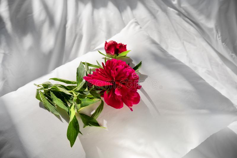 Flowers staying on open book in bed. Romantic good morning. Top view. Peony flowers staying on open book in white bed. Blank open diary and red flower on a royalty free stock photos