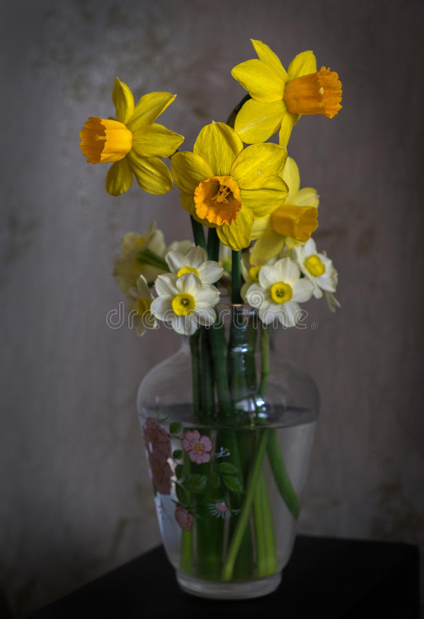 Flowers. Still life of daffodils. Beauty of yellow flowers stock photo