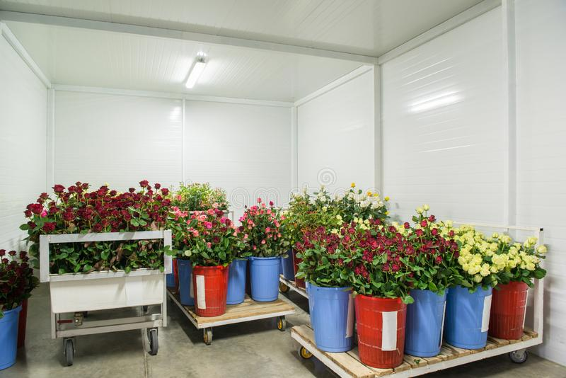 Flowers in storage stock photography