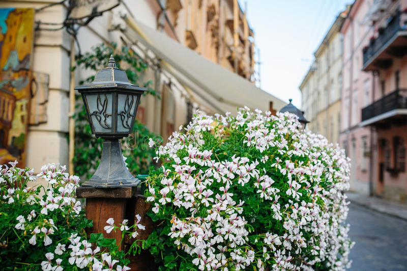 Flowers on the streets of Lviv.  royalty free stock photos