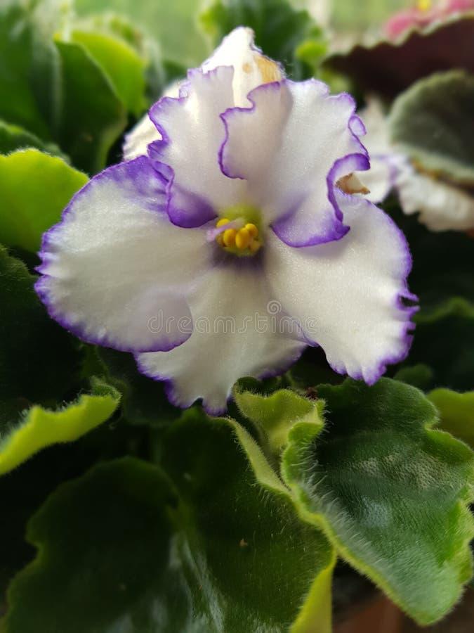 Flowers001 fotografía de archivo
