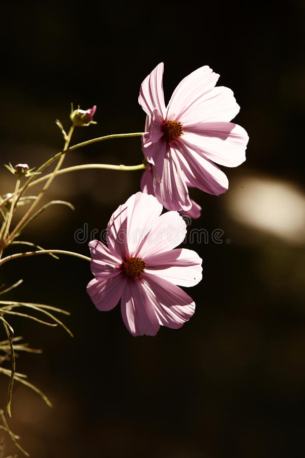 Download Flowers In Sunlight Royalty Free Stock Image - Image: 21758586