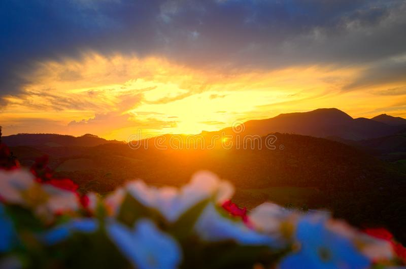 Flowers with sunset in the background stock images
