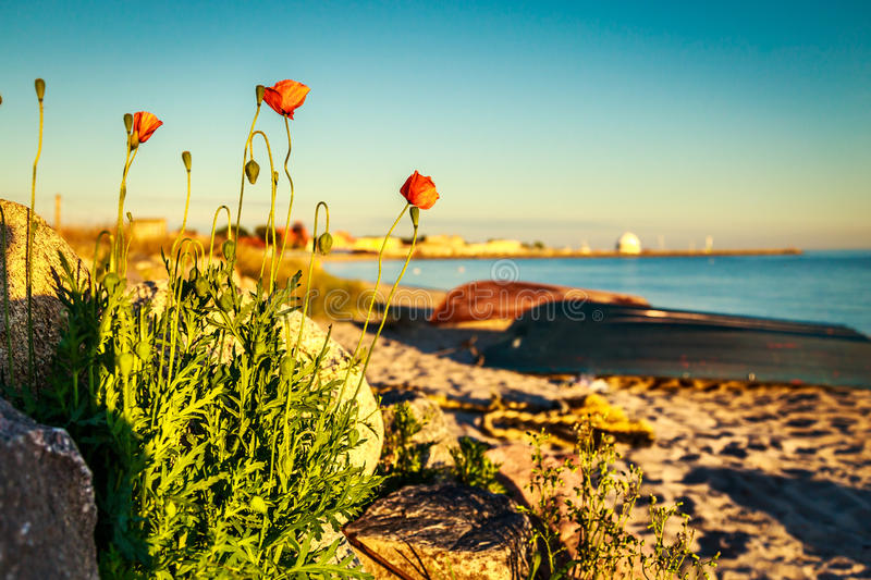Flowers at sunset stock images