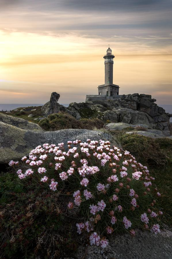Flowers, sunset and a lighthouse, royalty free stock photography