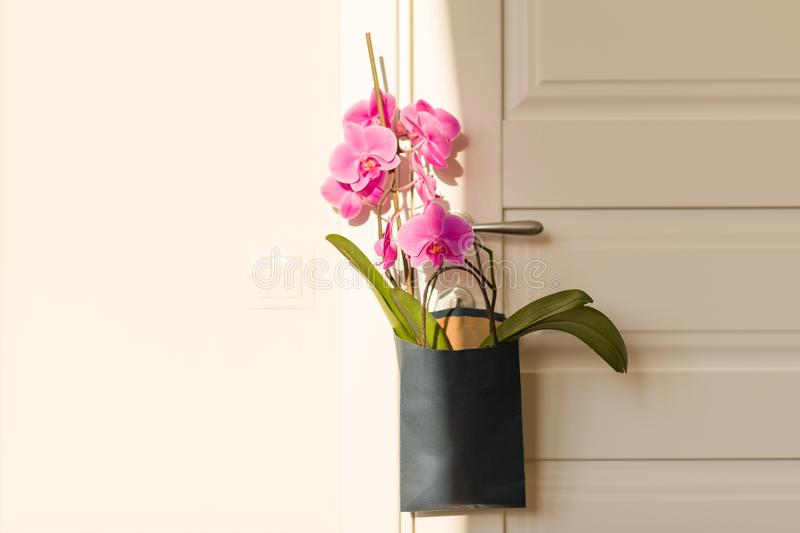 Flowers surprise on the door handle. Pink orchid in gift bag on white door in the room stock photos