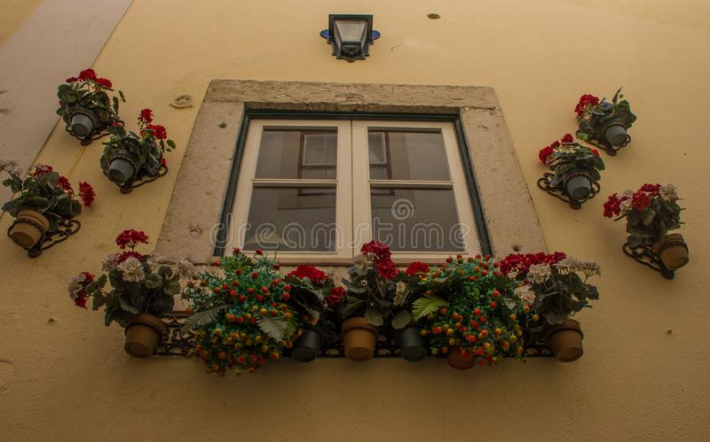 Flowers Surrounding a Window in Portugal. Numerous potted flowers surrounding a window along the streets of Lisbon, Portugal stock photo